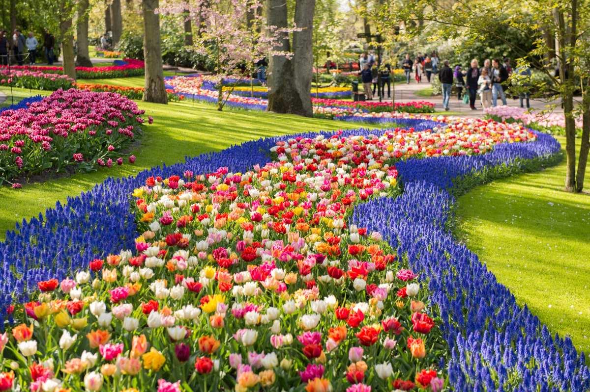 giardino tulipani